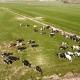 De Koeien mogen weer naar buiten - 5 april 2020!
